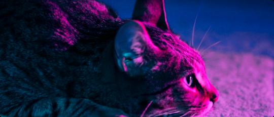 gato-contact-us