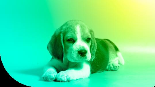 perro-slider
